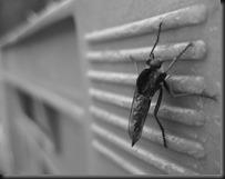 mosquito-450394_640